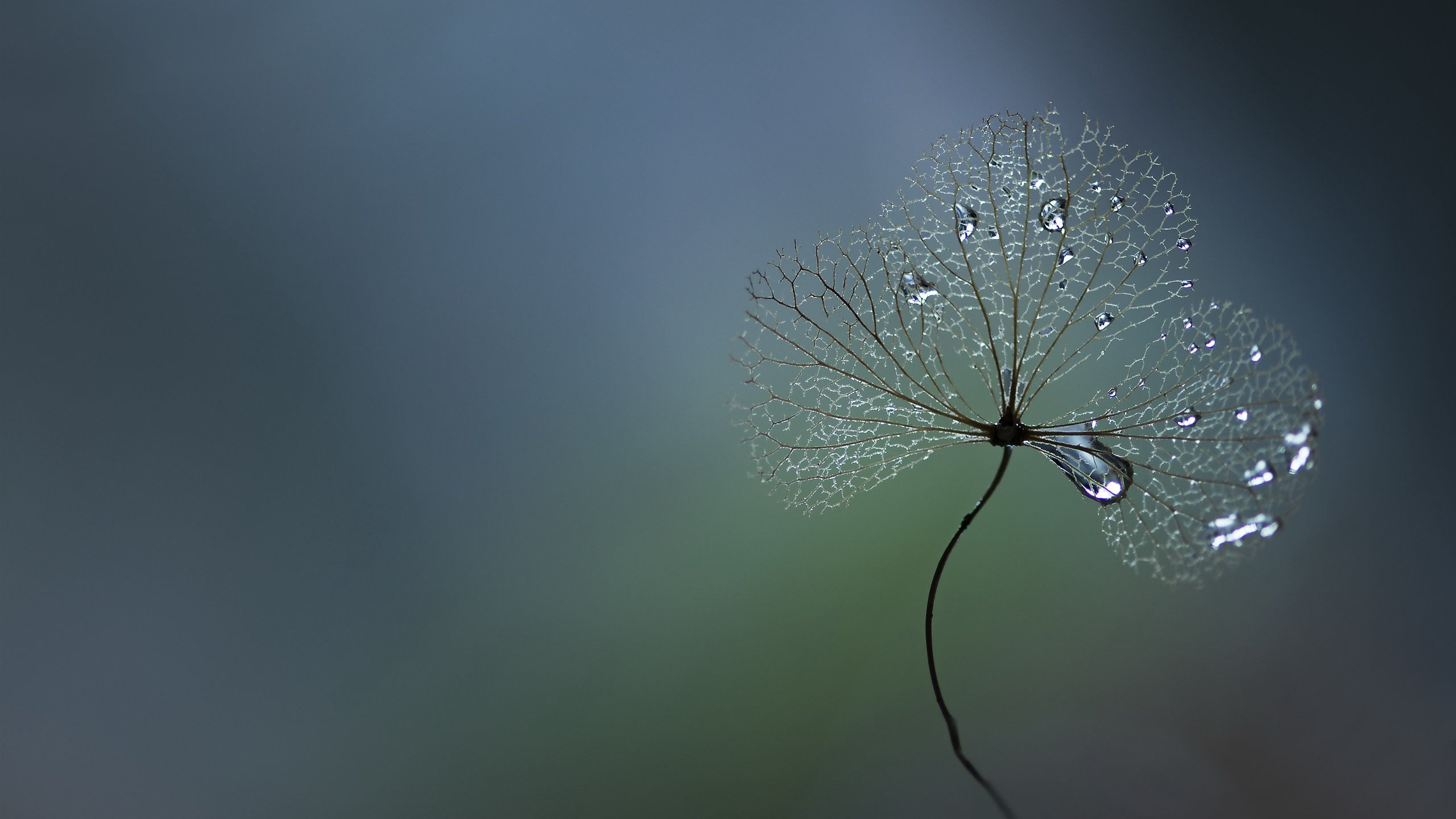 Plants-water-droplets-gray-background.jpg